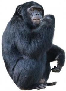 10-monkeypants